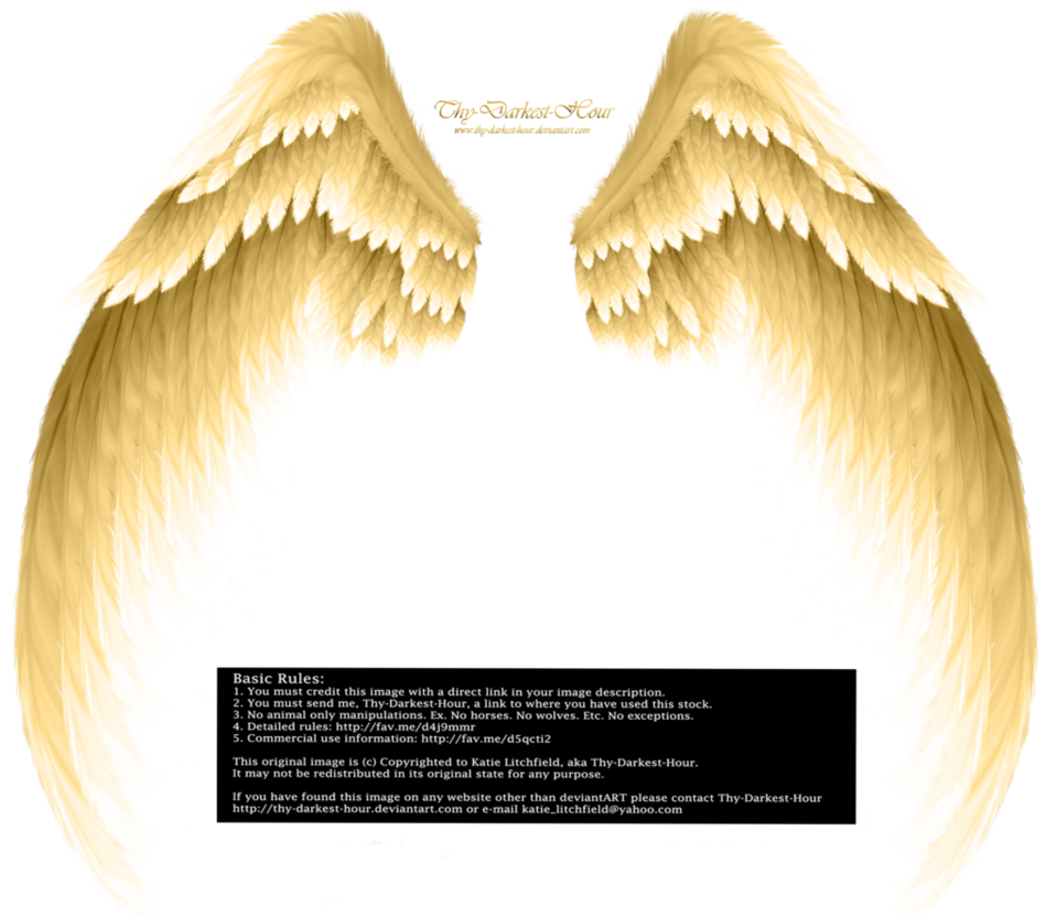 Breathtaking wings vector images