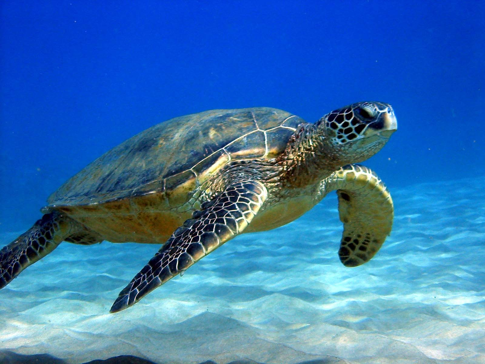 Sea Turtle | Animal Wonder