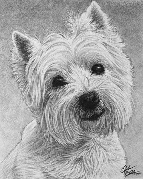 Drawings Of Dog - Cliparts.co