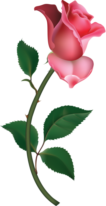red roses clipart - photo #44