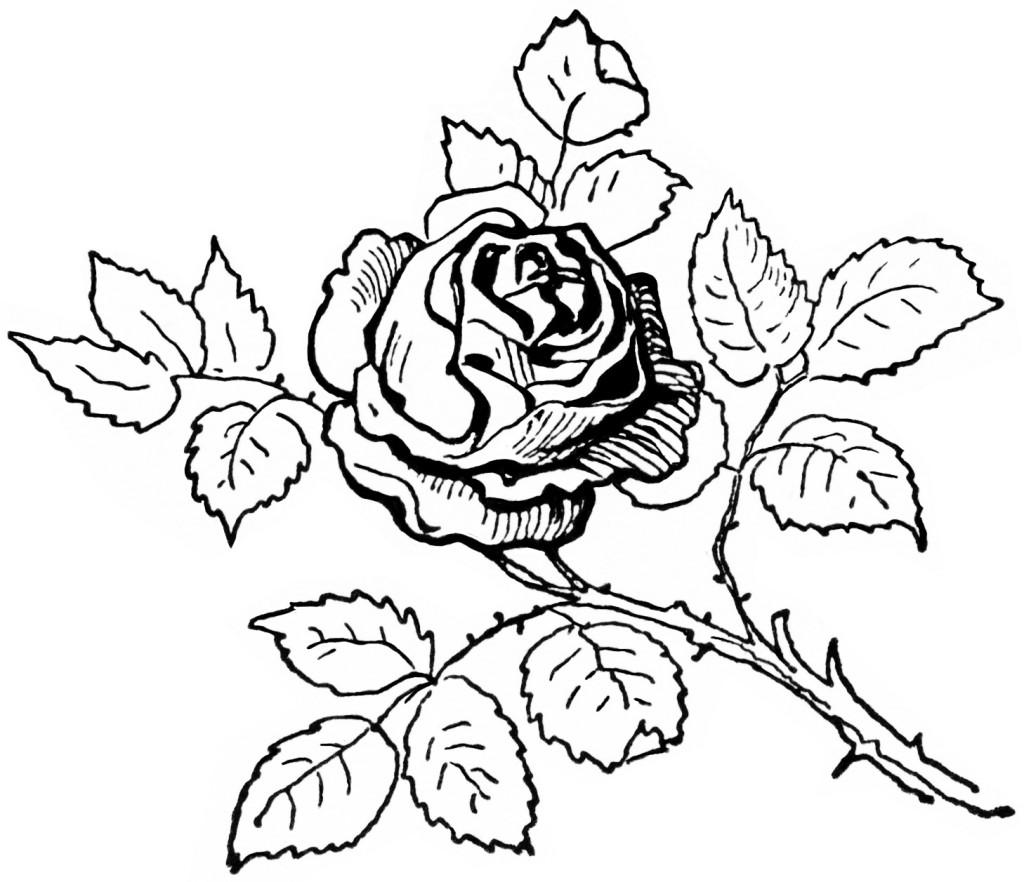 Spring Flower Clip Art Black And White Flowers Clip Art Black And