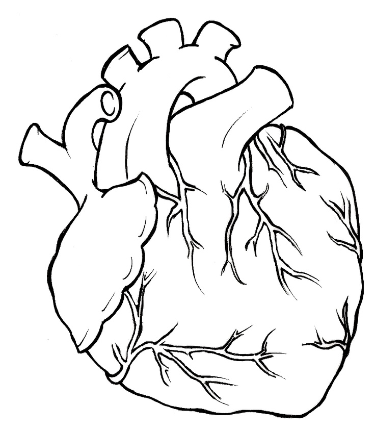human heart pictures images