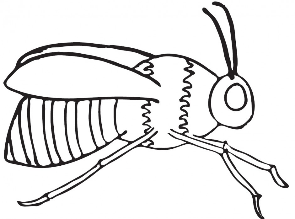 Line Drawing Bee : Bee line art clipart best bumble coloring pages