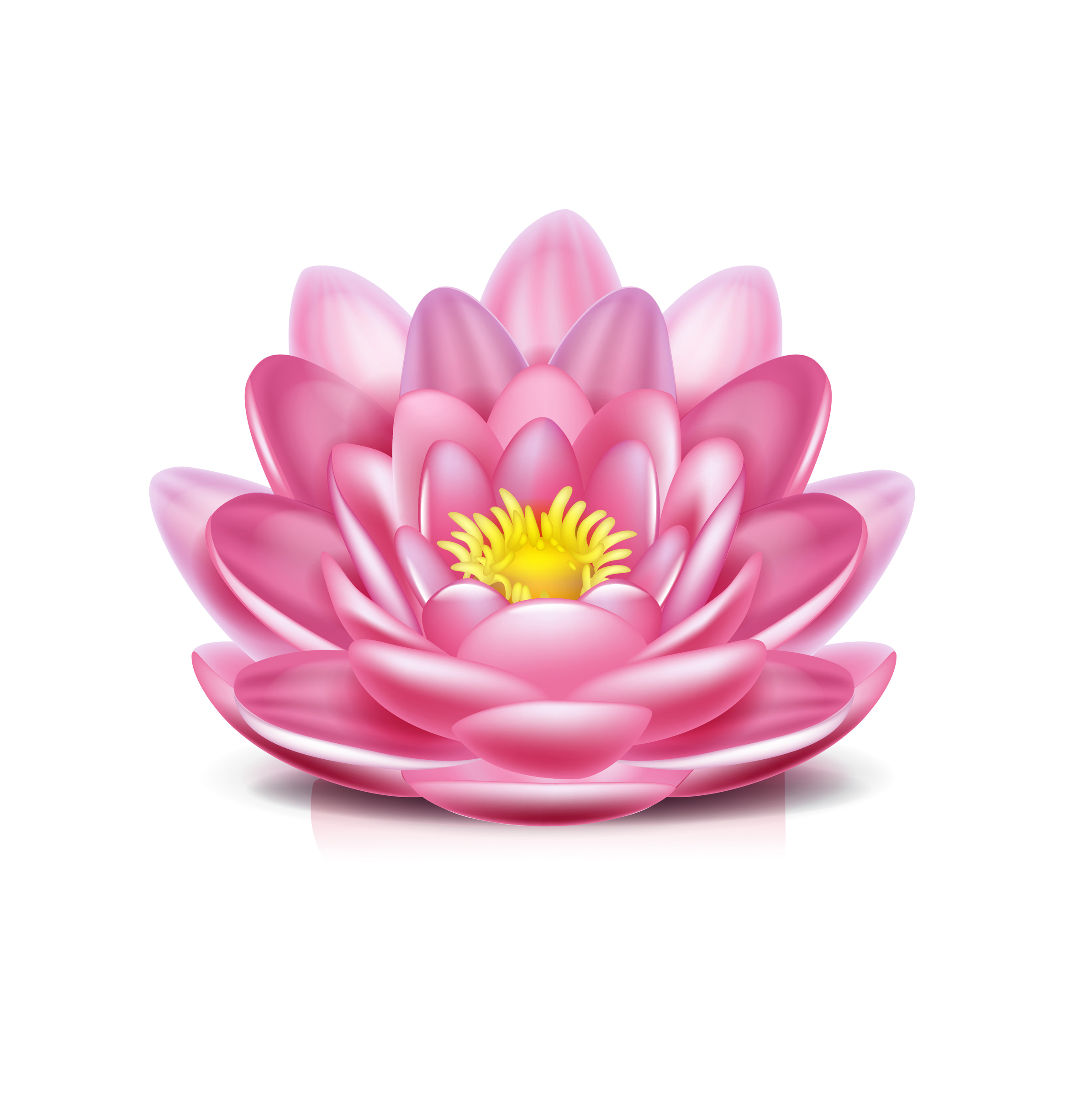 AvalonBeyond… | lotus flower isolated on white