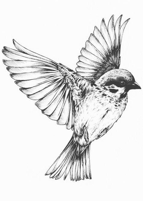 Bird Flying Drawing | Birds | Pinterest - Cliparts.co