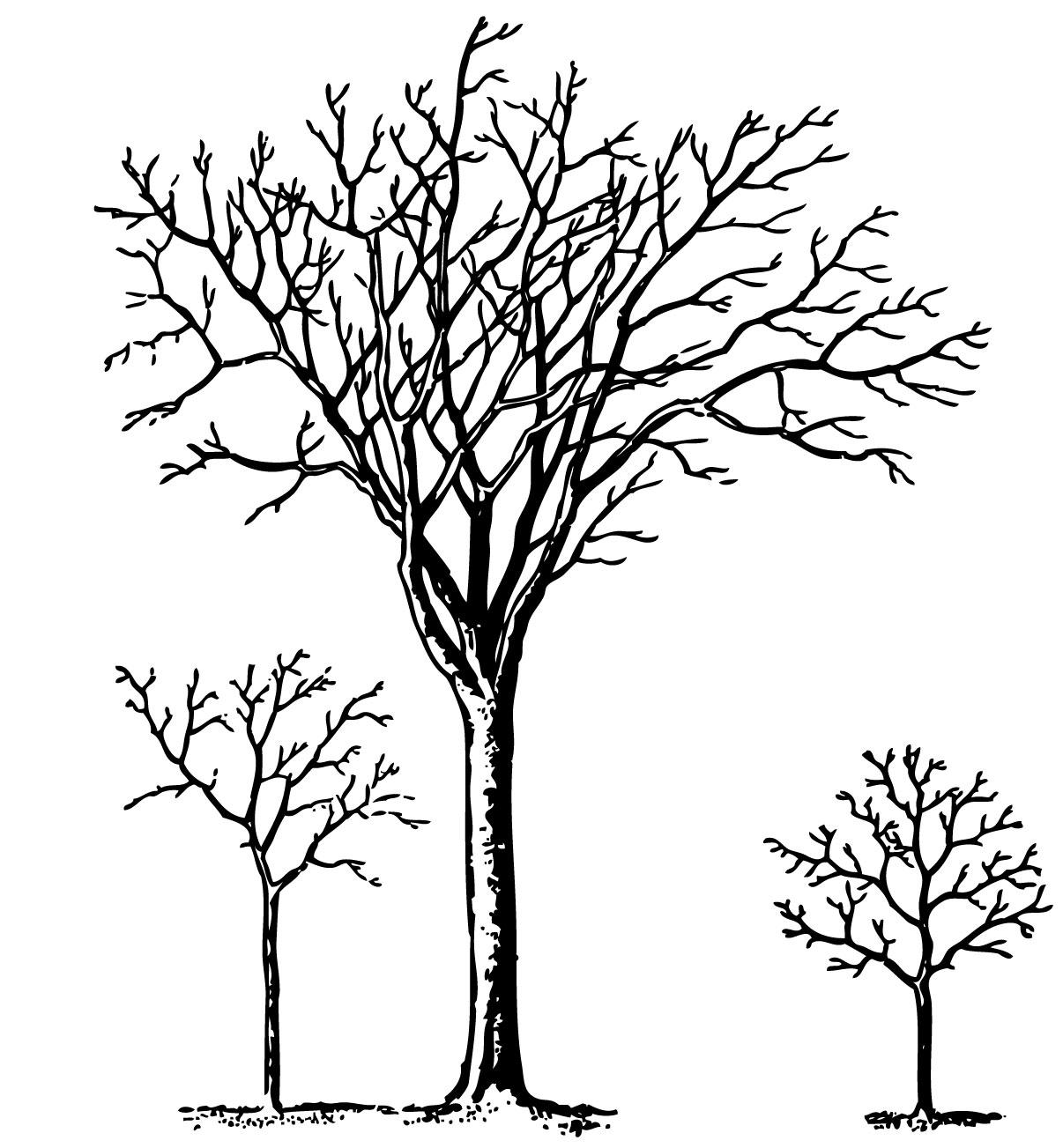 Line Art Of Trees : Line art trees cliparts