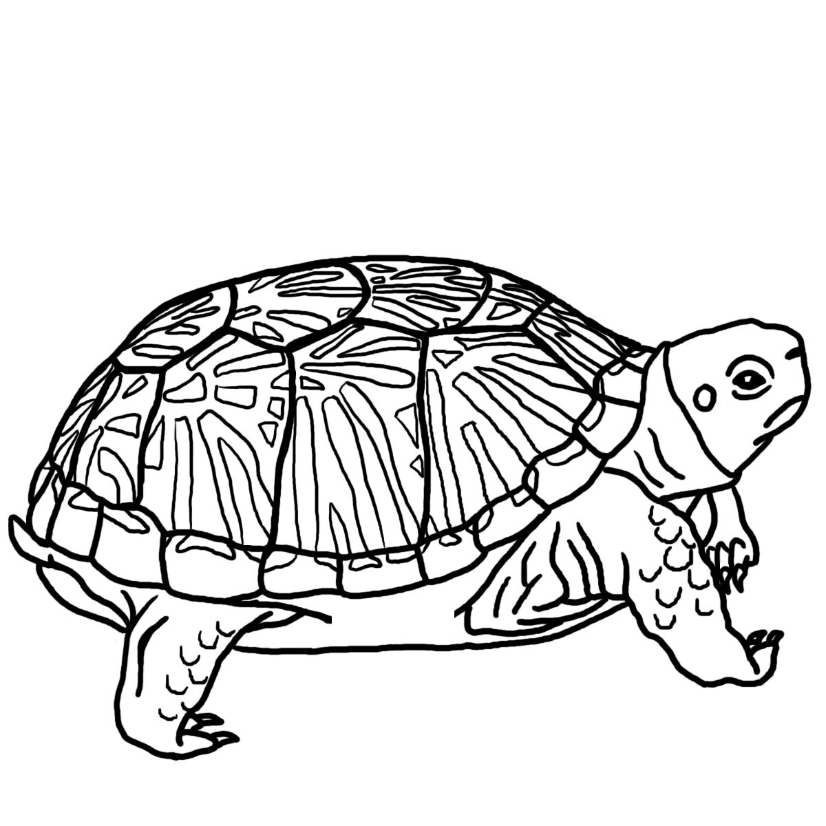 Turtles Clip Art Black...