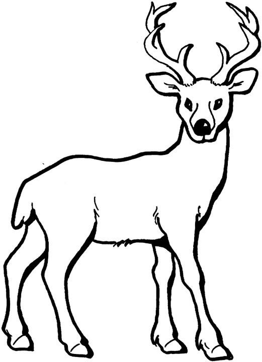 Buck Coloring Pages - ClipArt Best