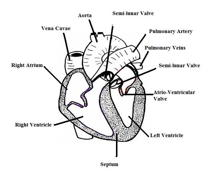 1999 Taurus Wiring Diagram