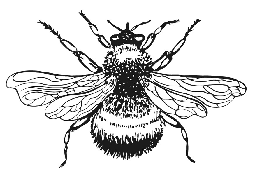 Bee Coloring Pages Cliparts Co