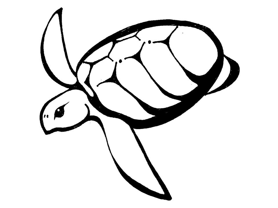 Sea Turtles Clip Art - Cliparts.co
