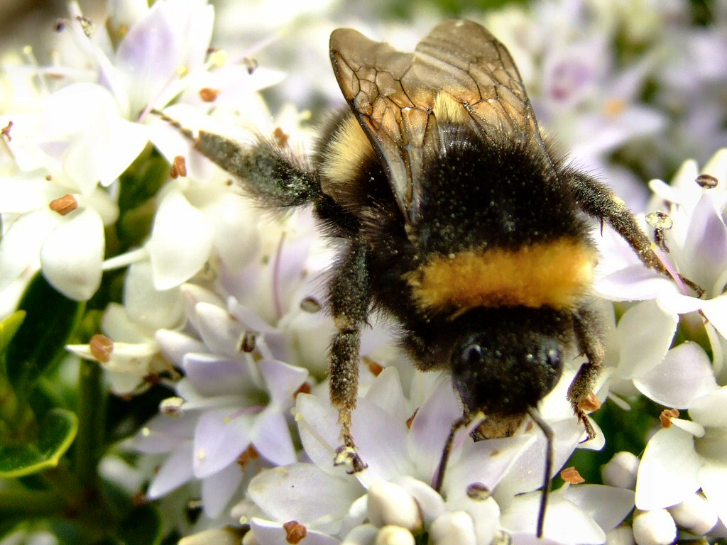Misconceptions of the Bumblebee: an in-depth Analysis of an ...