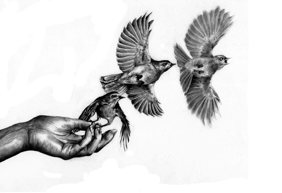 Flying Bird Drawing - Cliparts.co