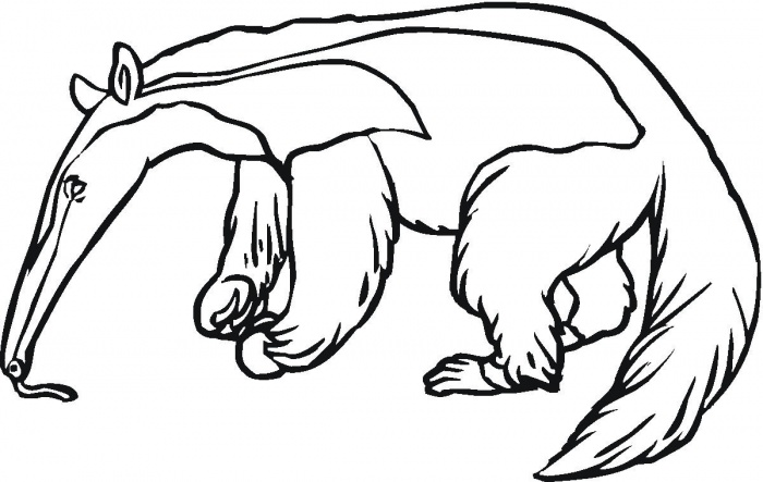 anteater drawing