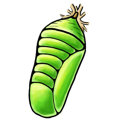 how to draw a caterpillar cacoon