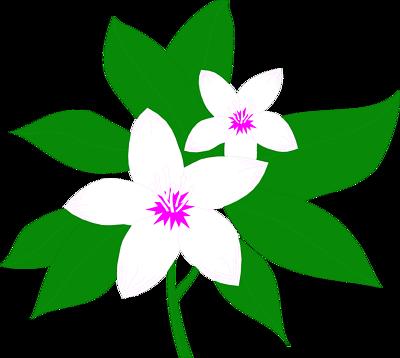 Pix For > Magnolia Clip Art