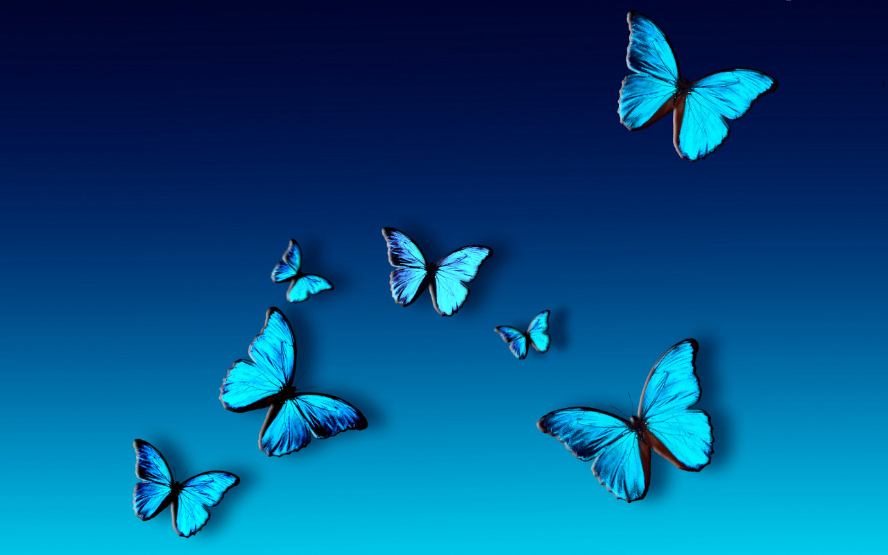 Blue Butterfly Hd Wallpaper Full Free Hd Wallpapers Cliparts Co