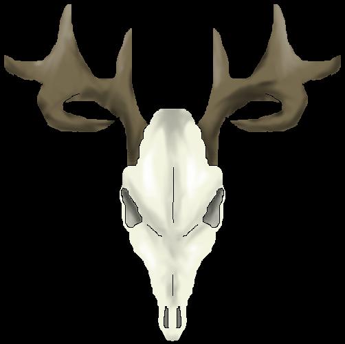 White Tail Deer Sckull Drawn: Drawings Of Deer Skulls