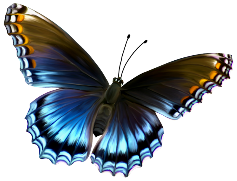 Cute Butterfly Clip Art - Cliparts.co