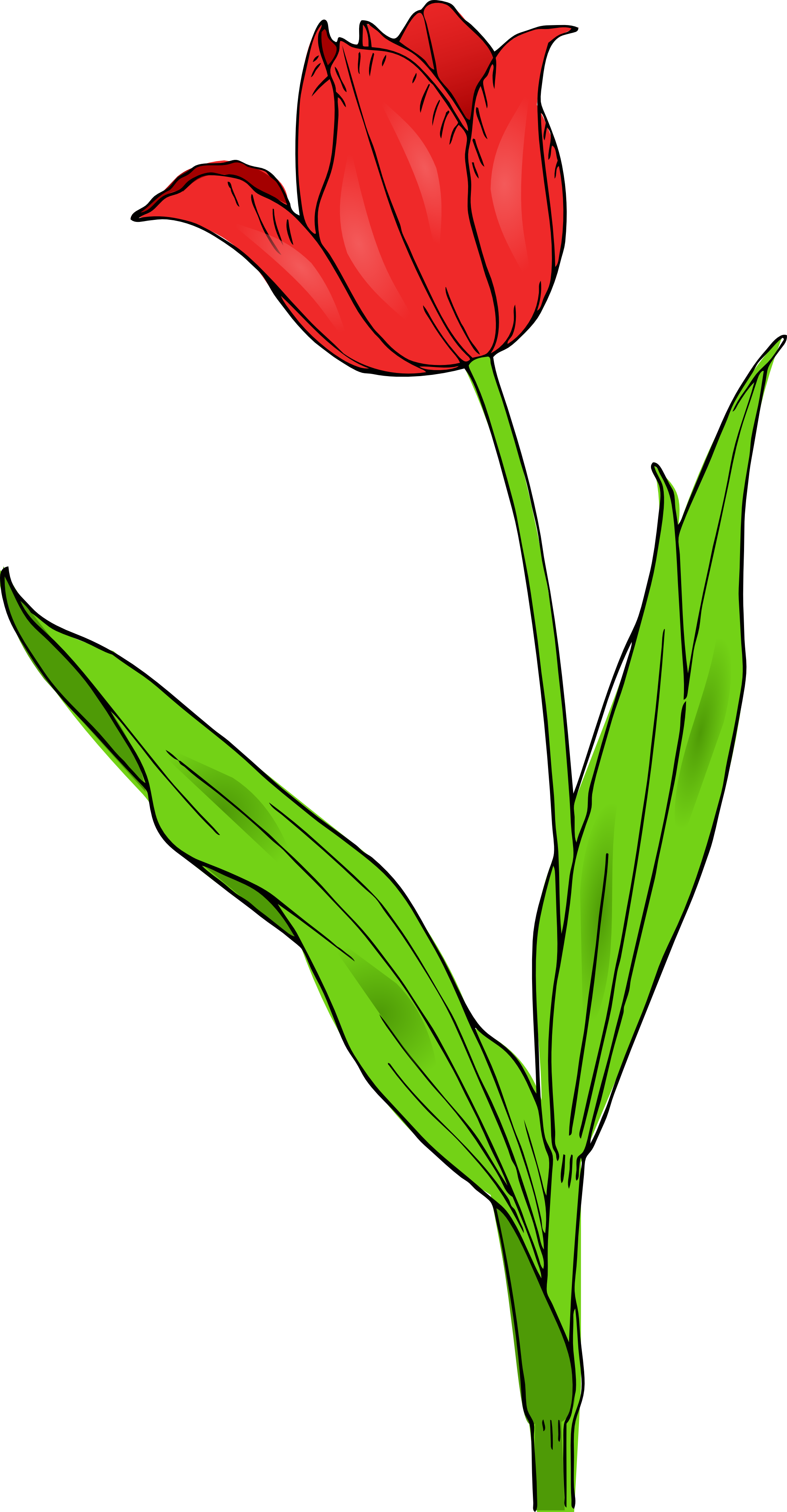 60 images of Tulip Clip Art Free . You can use these free cliparts for ...