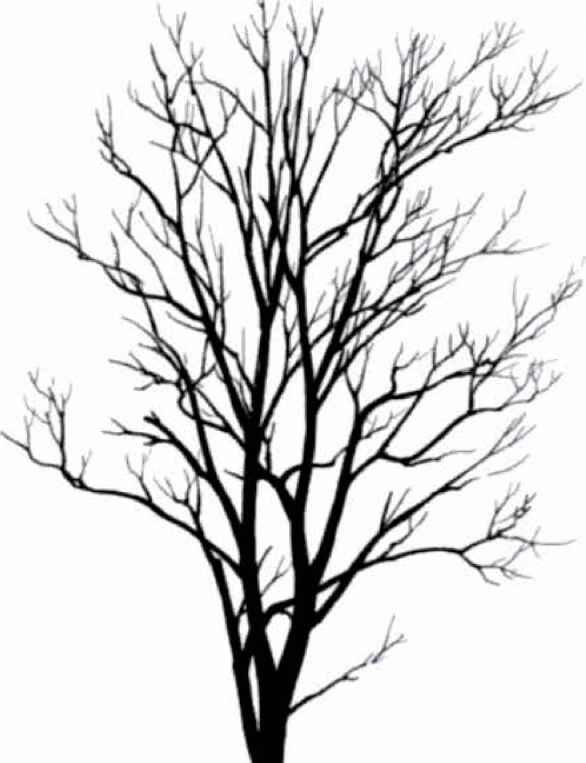 clip art tree silhouette - photo #34