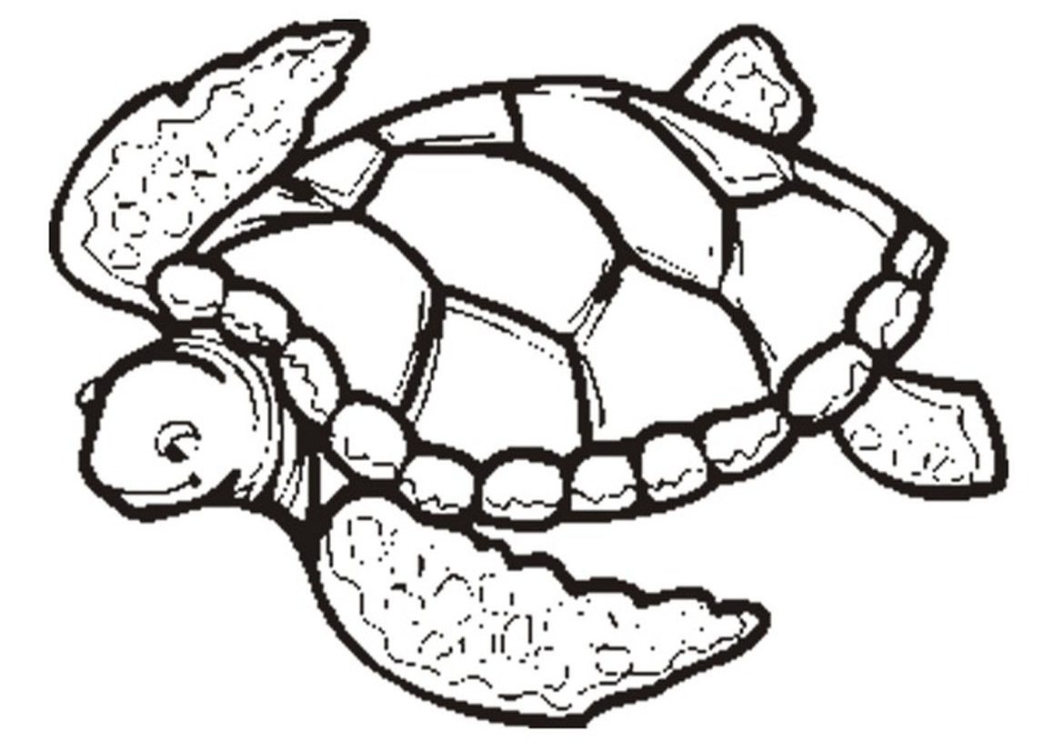 Line Drawing Sea Turtle : Sea turtle outline cliparts