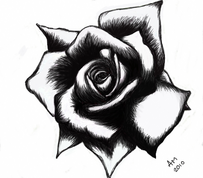 black and white rose drawing. Black Bedroom Furniture Sets. Home Design Ideas