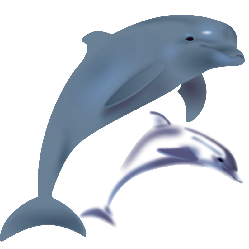 Dolphin pictures clip art cliparts co