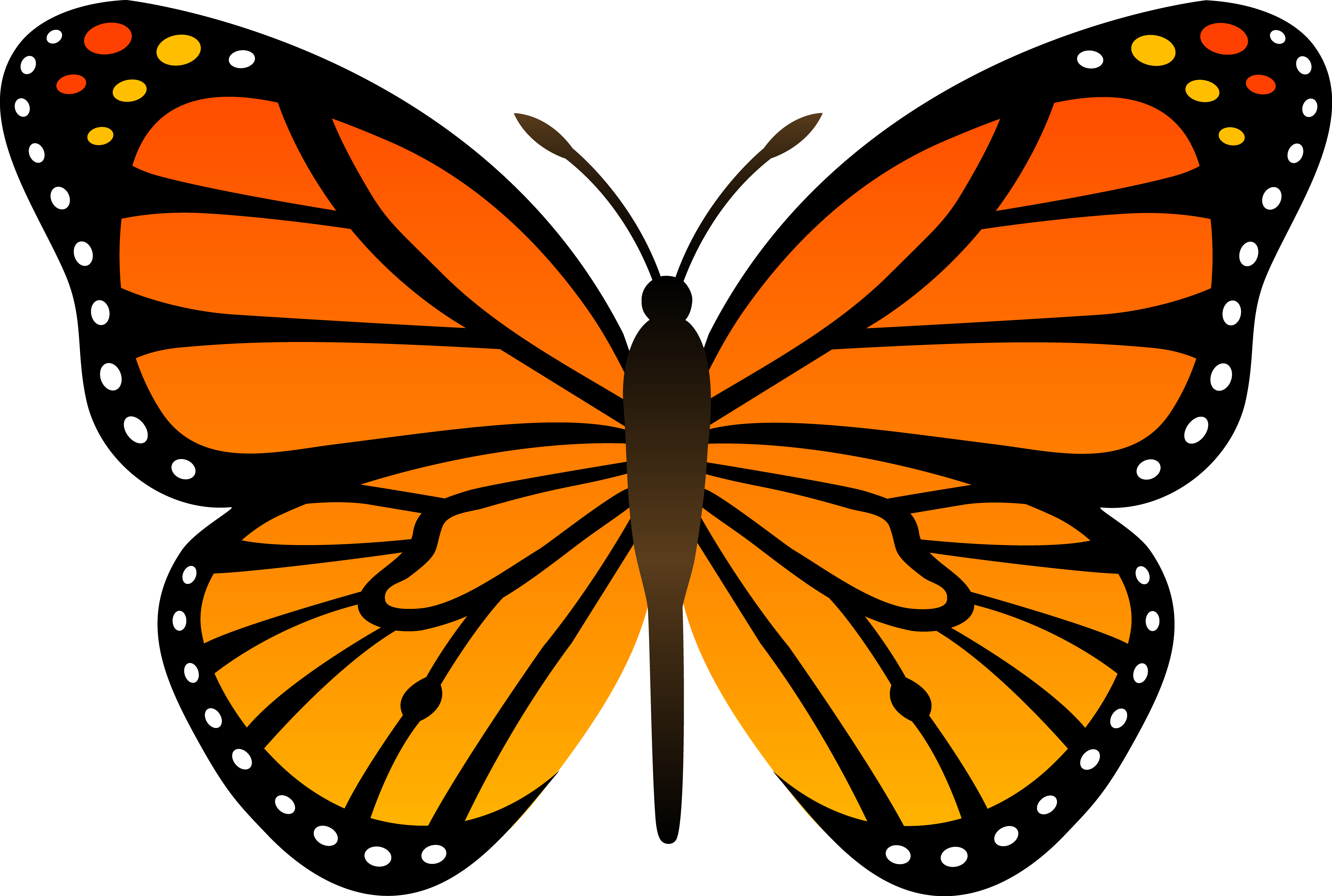 Black and orange butterfly drawing