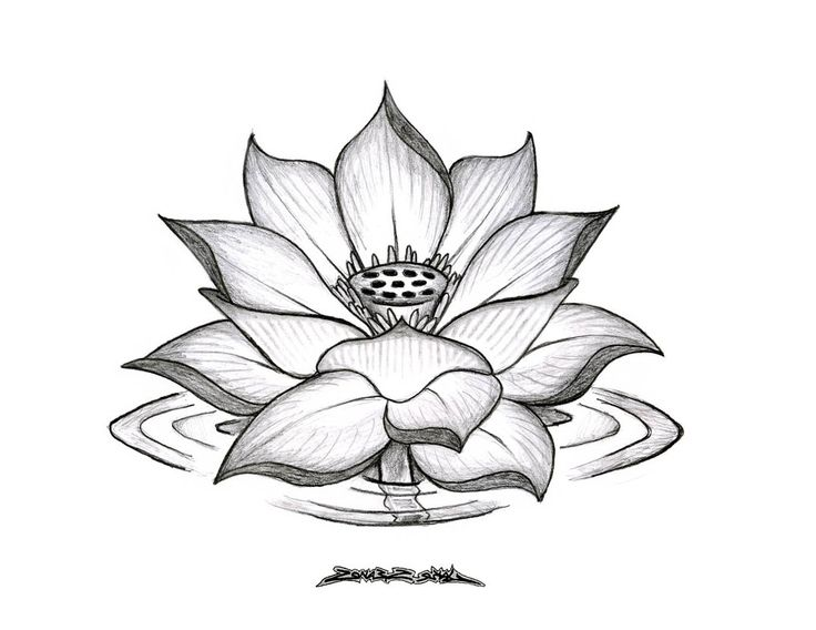 Flower Outline likewise File Actaea pachypoda drawing also How To Draw A Sunflower moreover 3623612 likewise Bunga 15307420. on simple flower drawing