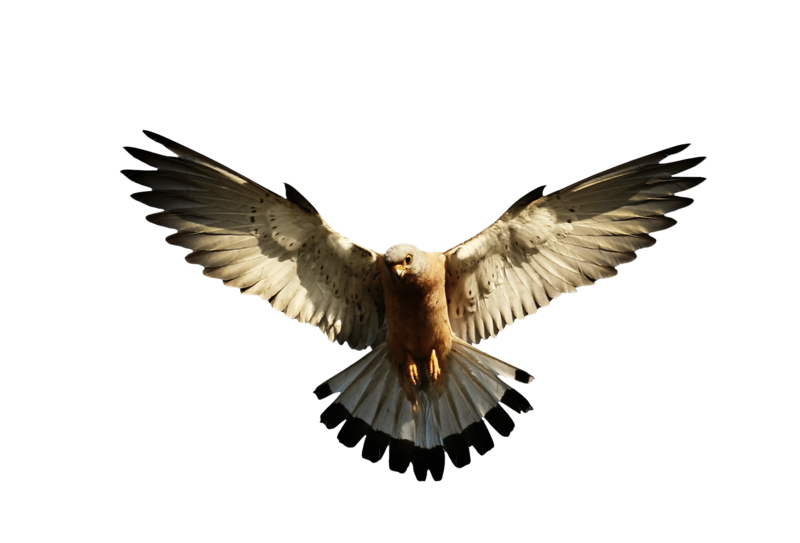 Hawk Fisher PNG by LG-Design on DeviantArt
