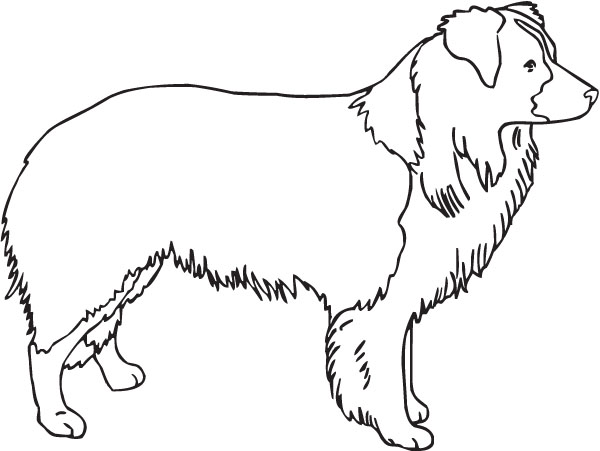 rough collie coloring pages - photo#17
