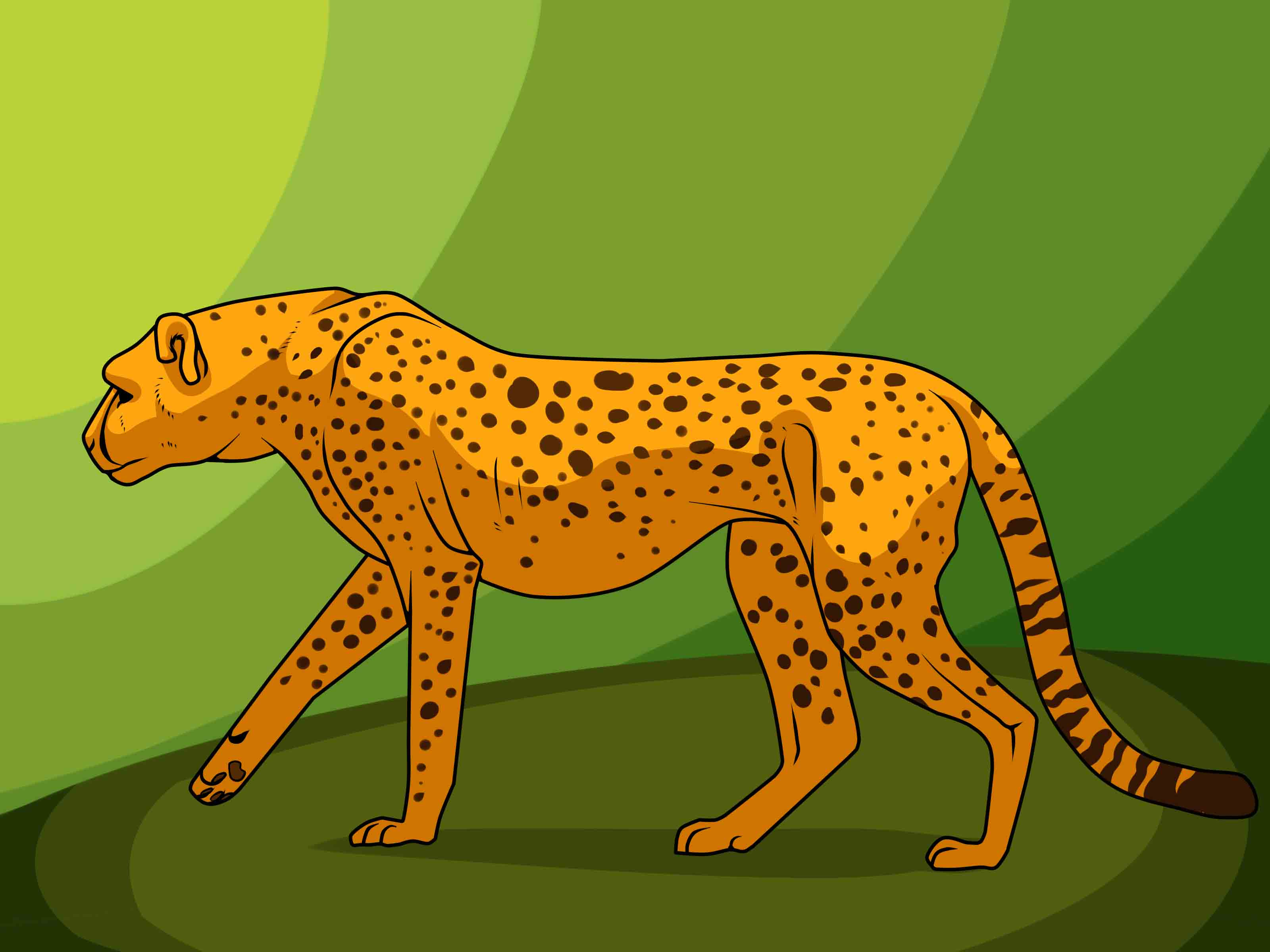 Co color to draw - How To Draw A Cheetah 13 Steps With Pictures Wikihow