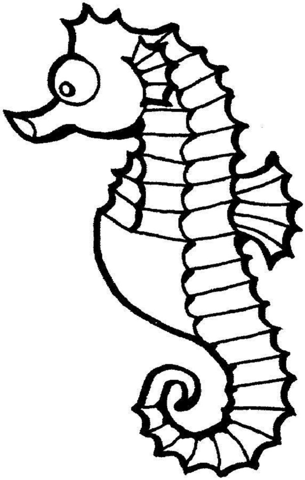 Cute Seahorse Coloring Pages
