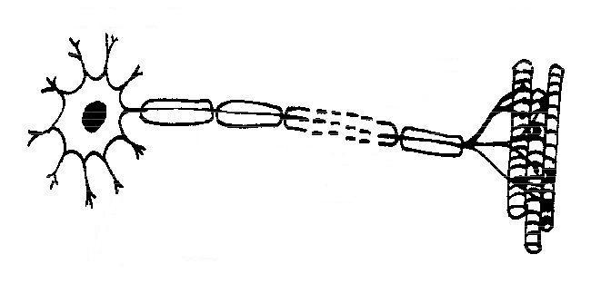 Heart diagram unlabeled cliparts u414adad label heart diagram worksheet ccuart Images