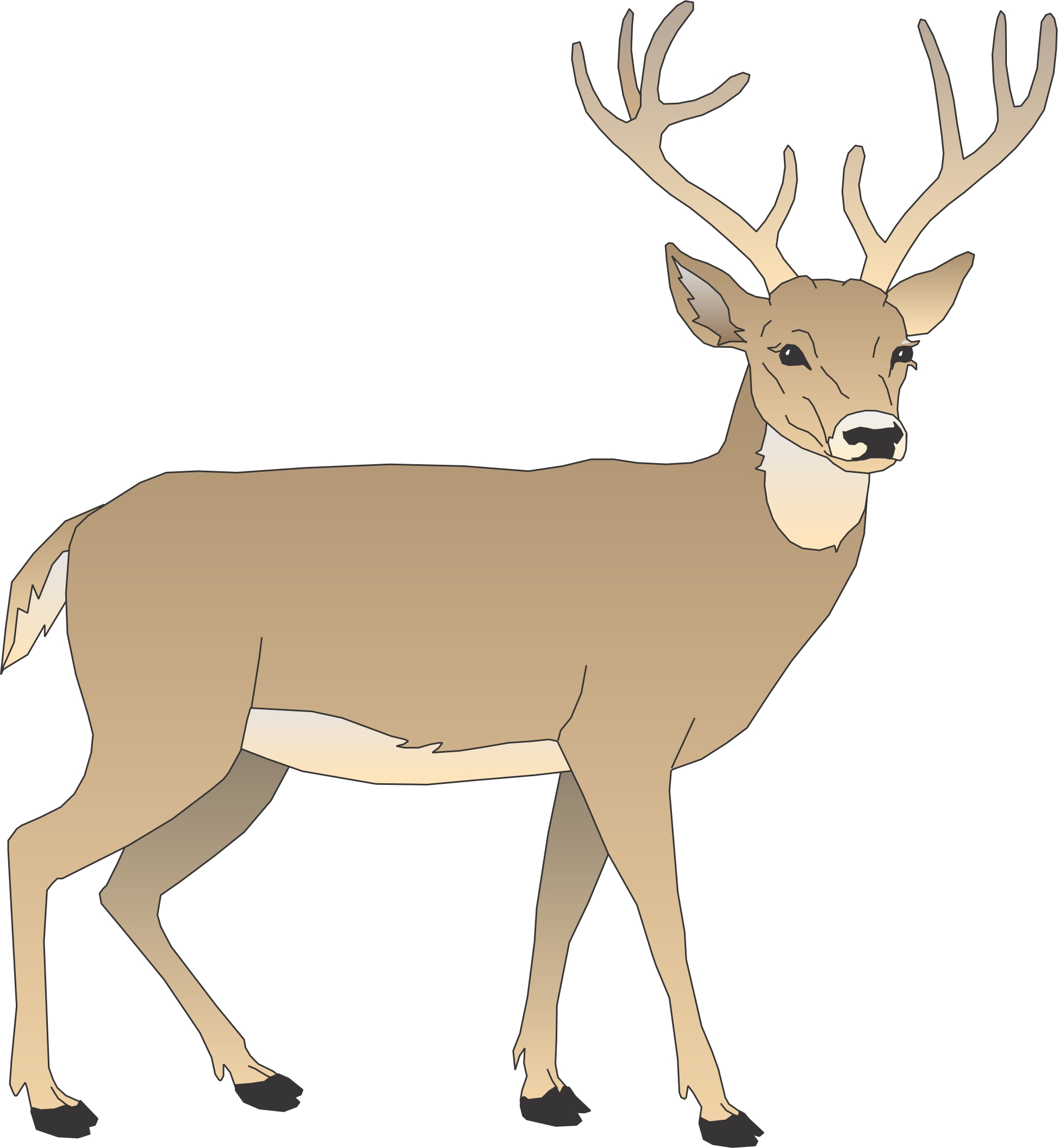 cartoon pictures of deer
