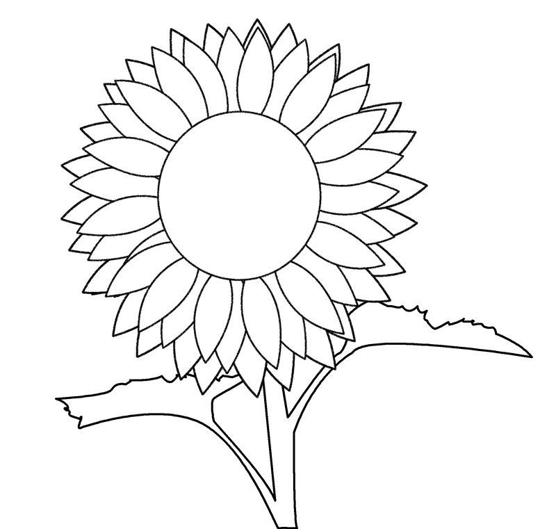 Line Drawing Sunflower : Sunflower drawing template imgkid the image