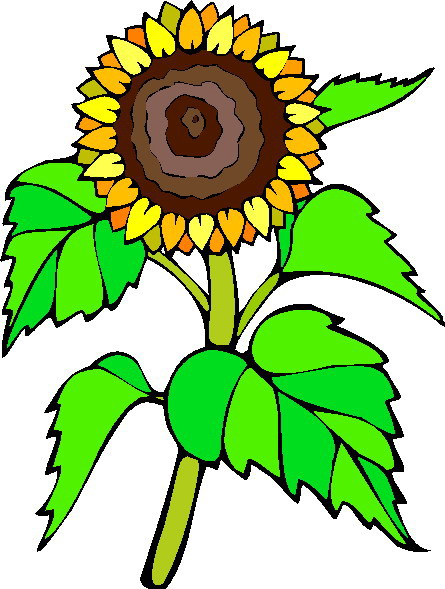 Clip Art - Clip art sunflower 331101