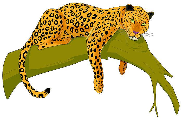 jaguar animal clipart - photo #14