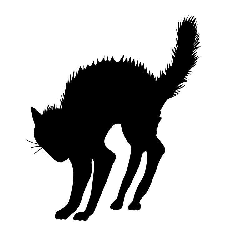 Scary Halloween Black Cat Silhouette | Tote Bag Inspiration | Pintere…