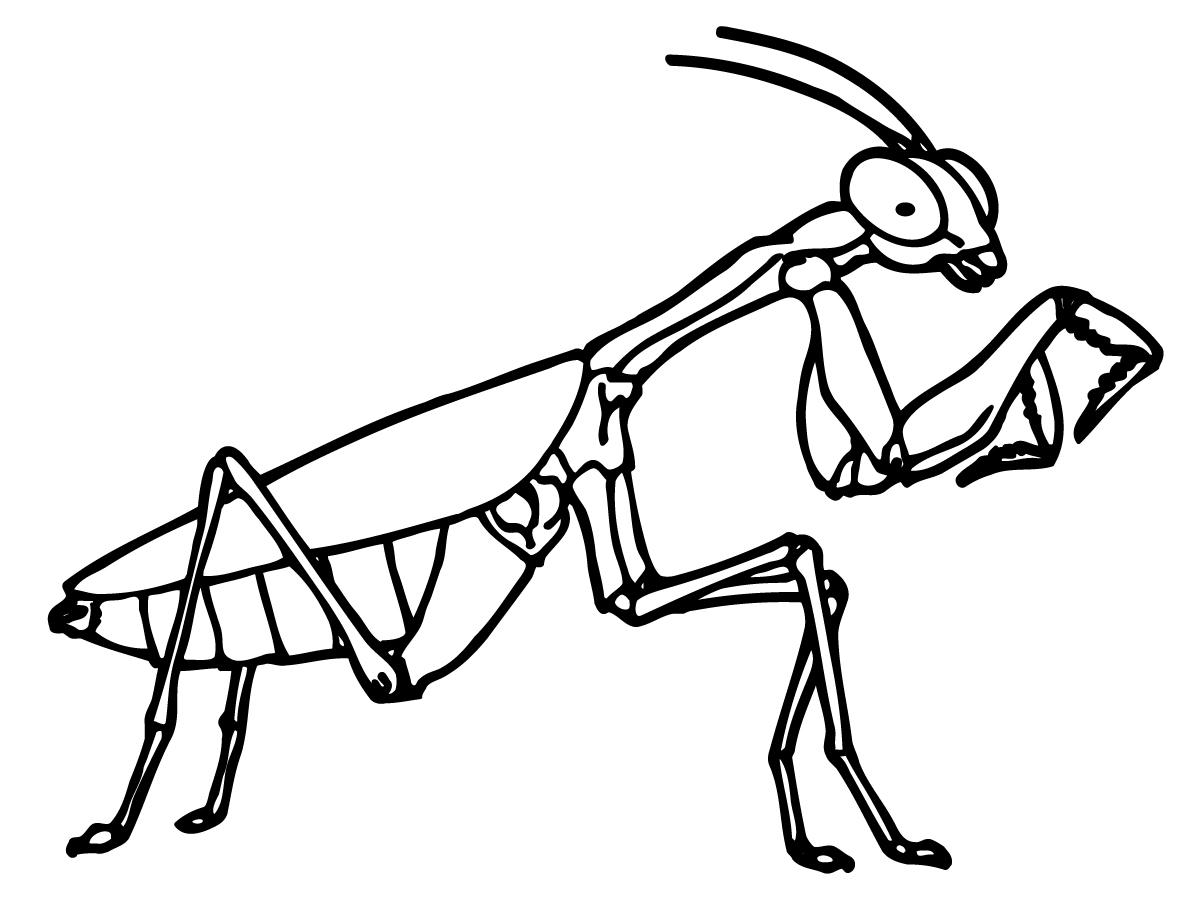 Praying mantis clipart black and white for Praying mantis coloring page
