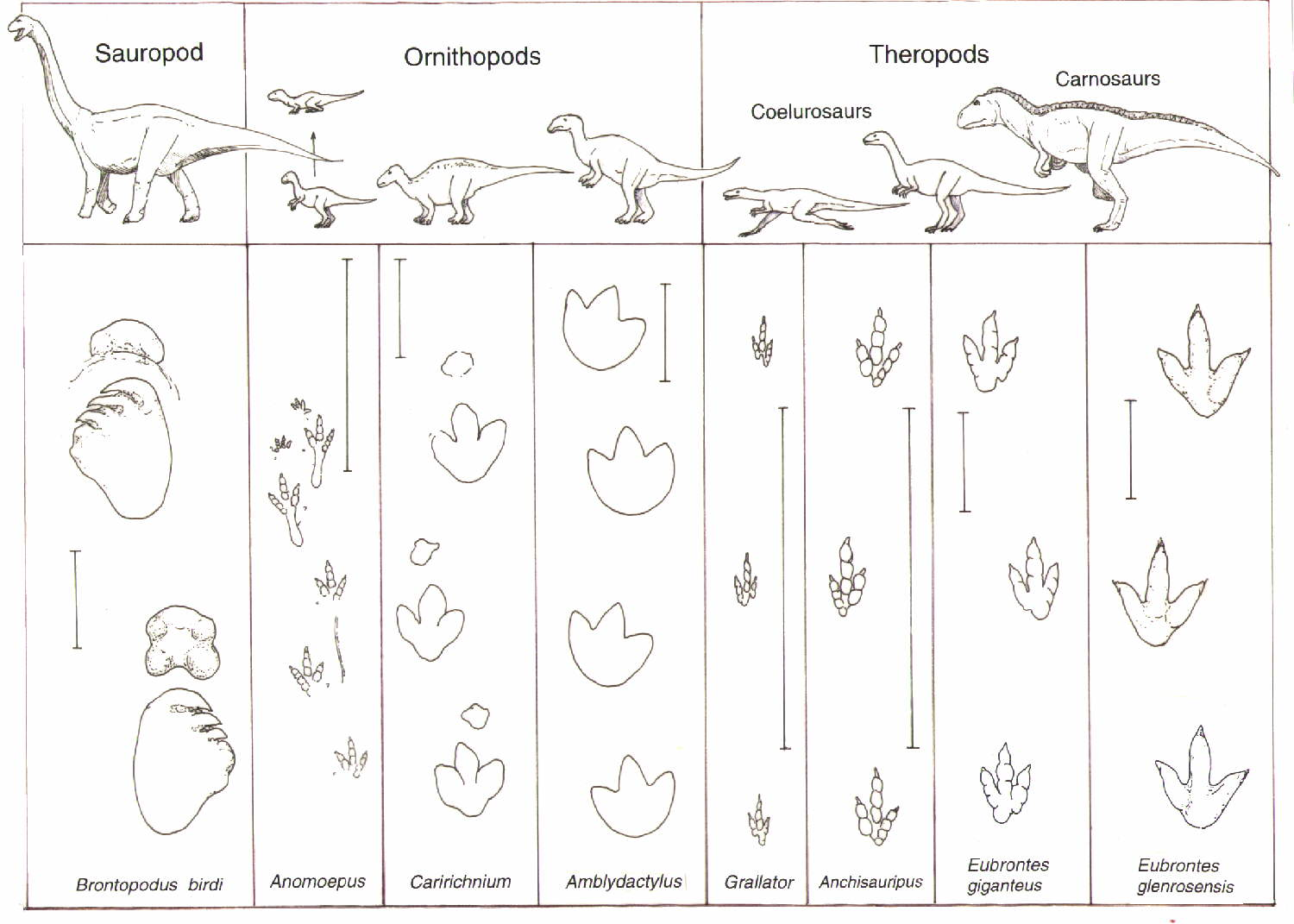 picture regarding Printable Dinosaur Footprints identify Dinosaur Footprints -