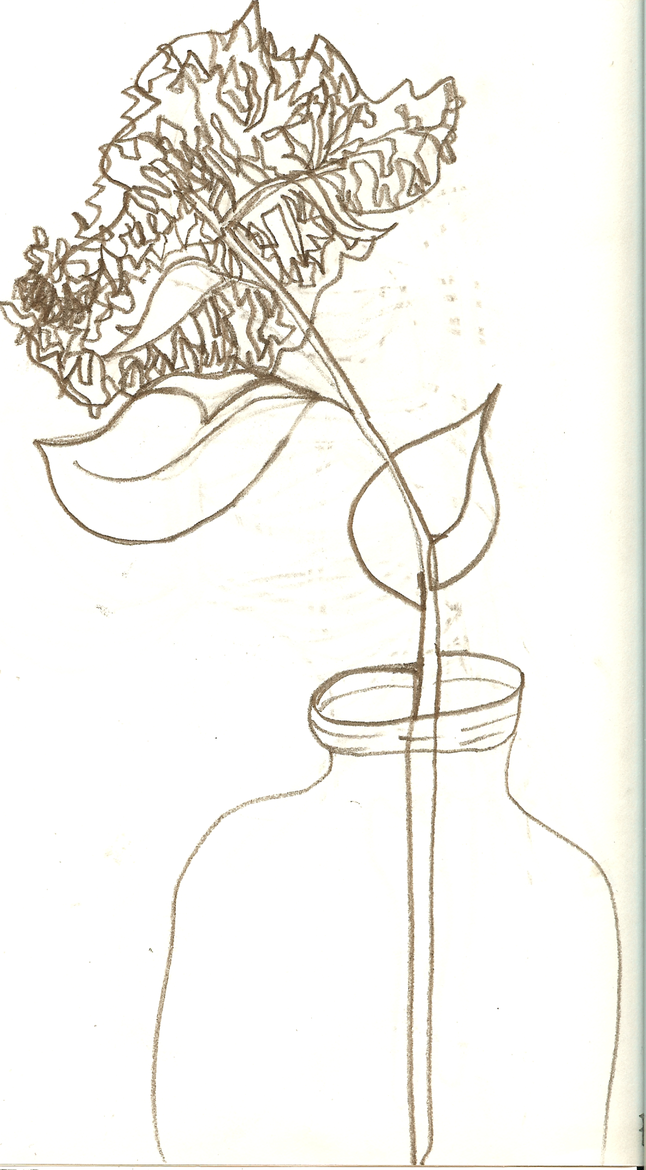 Contour Line Drawing Plant : Line drawings of flowers cliparts