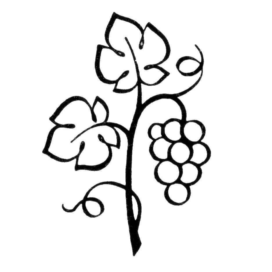 50 images of Grape Vine Clip Art . You can use these free cliparts for ...