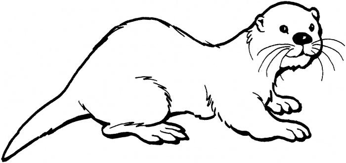 Shamu cartoon for Shamu coloring pages