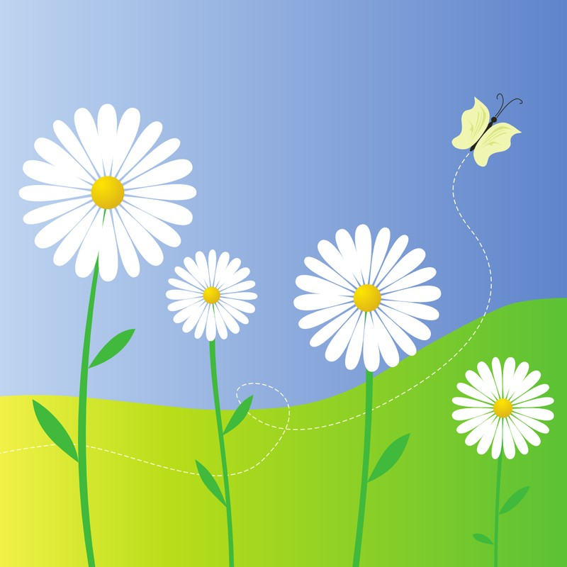daisy flower images template - photo #35