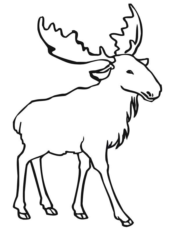 Moose head drawing outline - photo#25