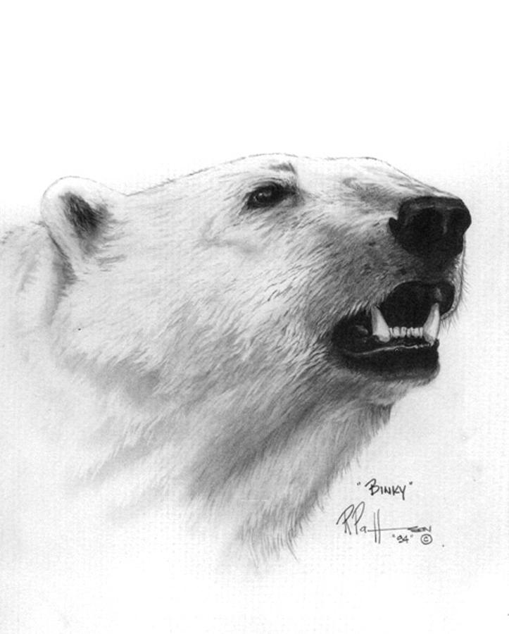 Bear Drawing - Cliparts.co