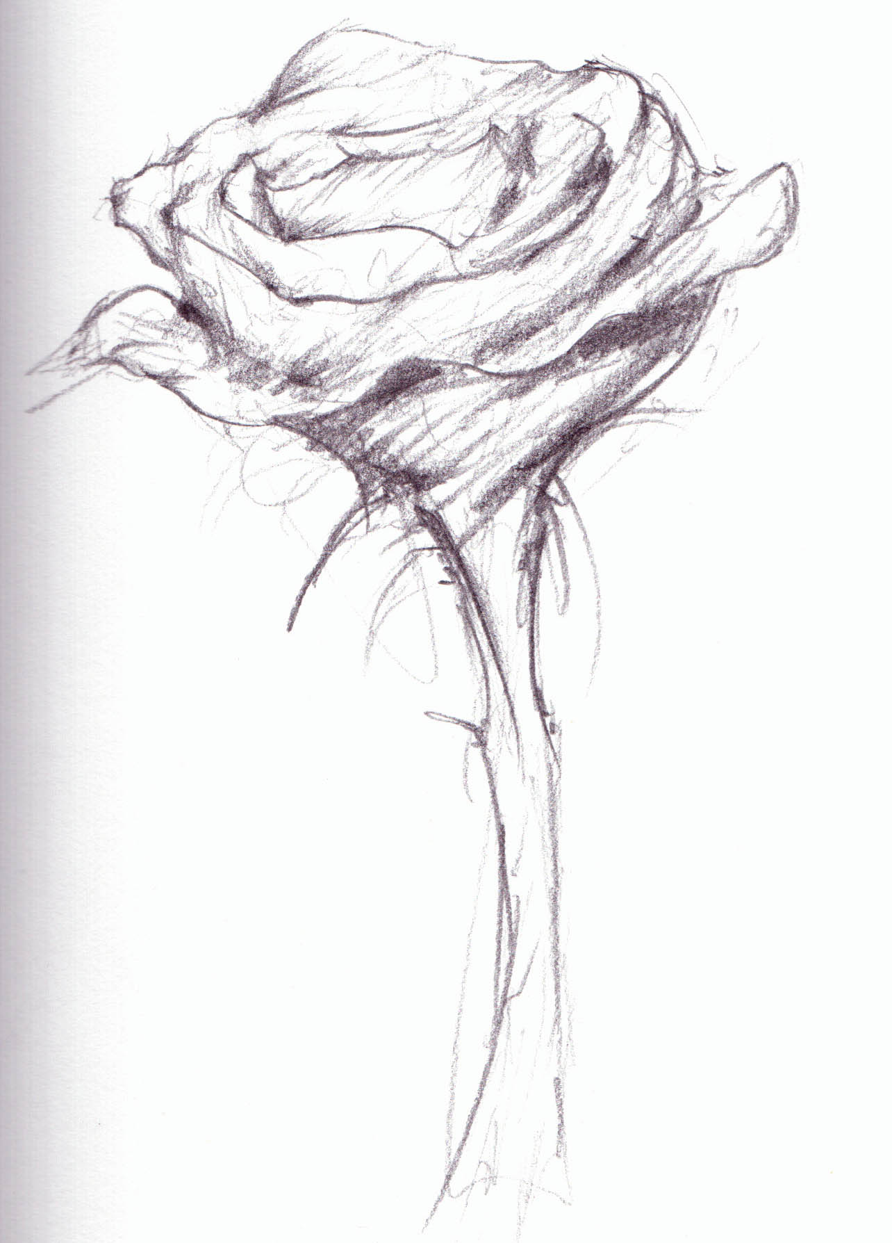 Flower Sketch Cliparts