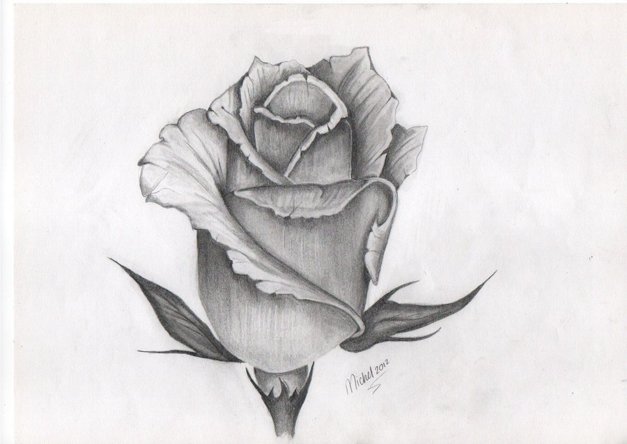 Rose Drawings Cliparts Co